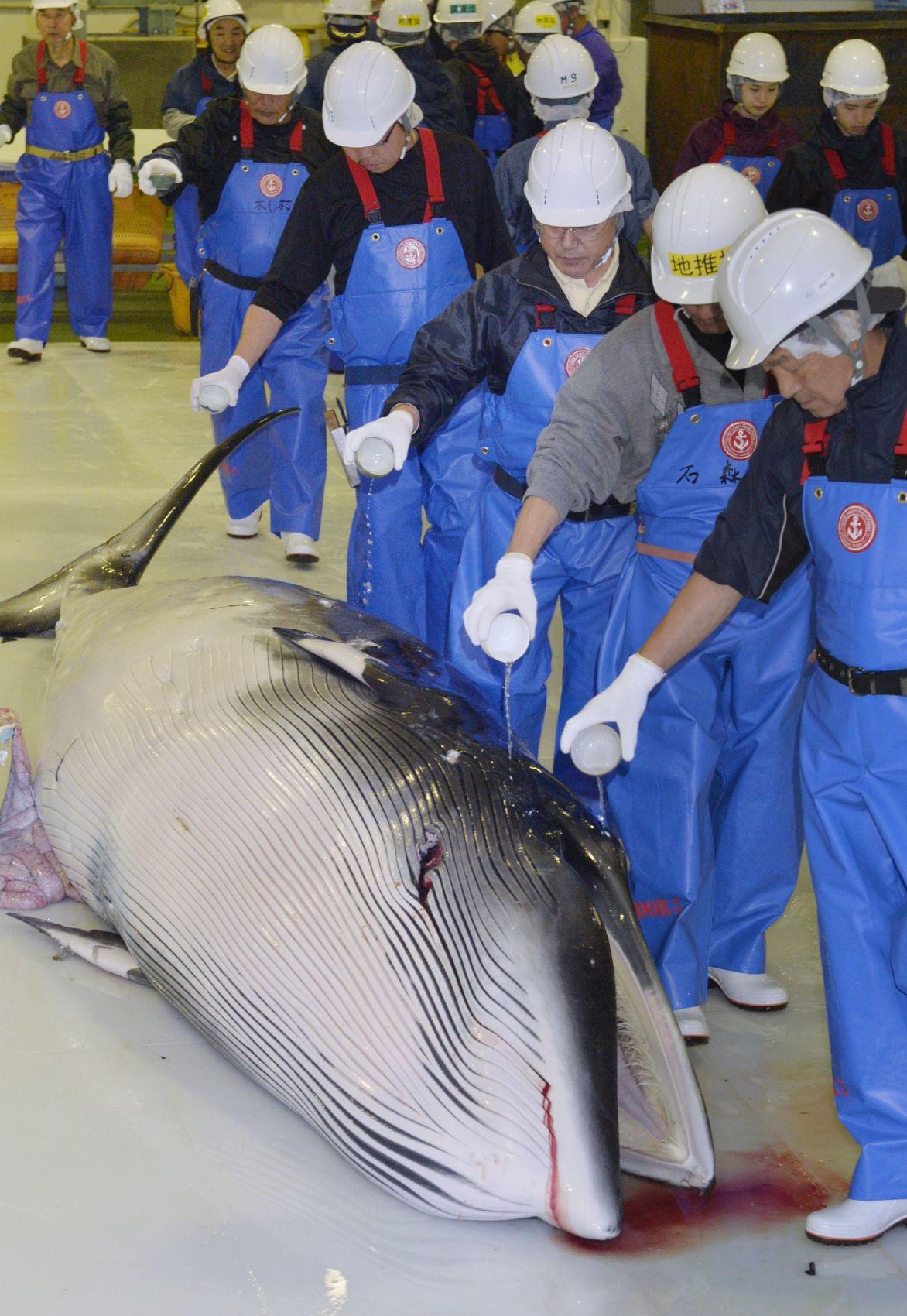 Japan Whaling 015