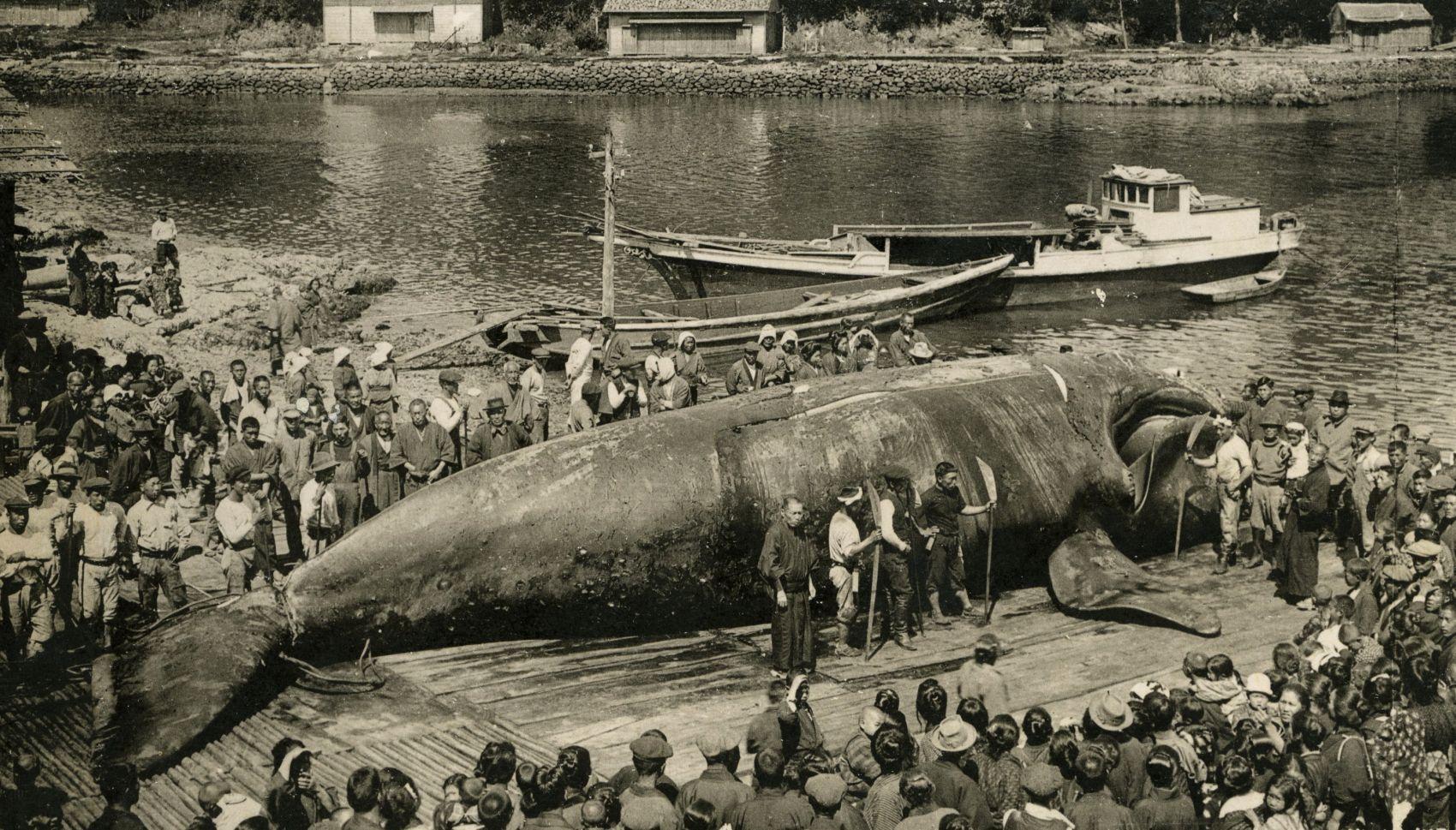 Japan Whaling 016