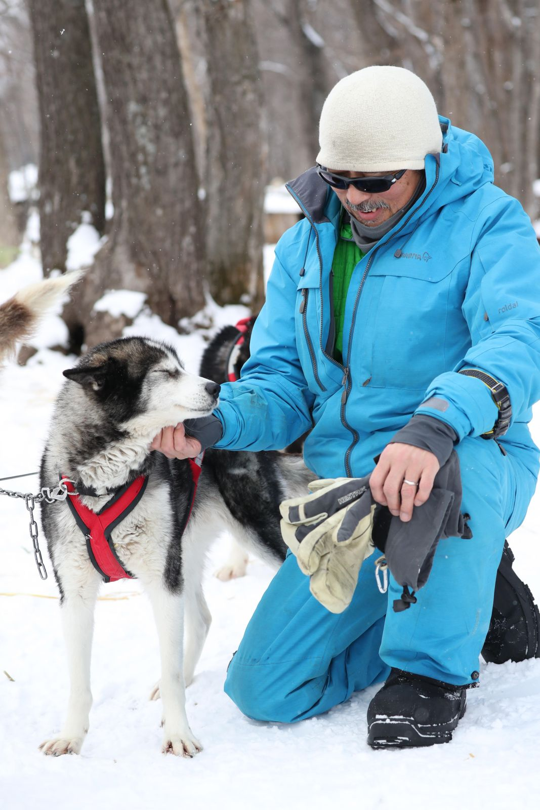 Hokkaido Sled Dogs Build Trust with Their Snow Tracks