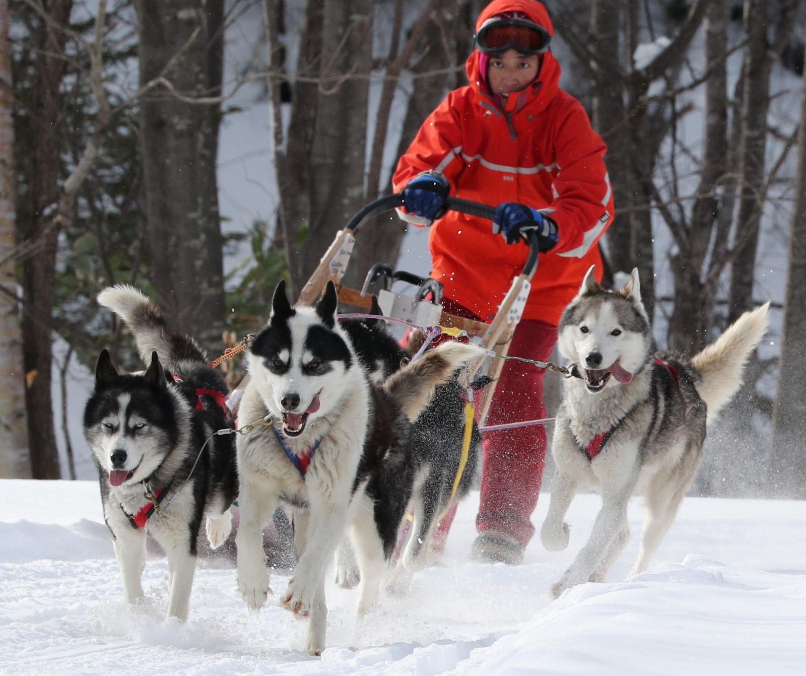 Hokkaido Sled Dogs Build Trust with Their Snow Tracks