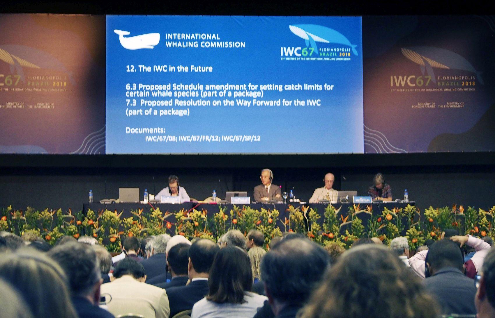 Japan Whaling IWC 005