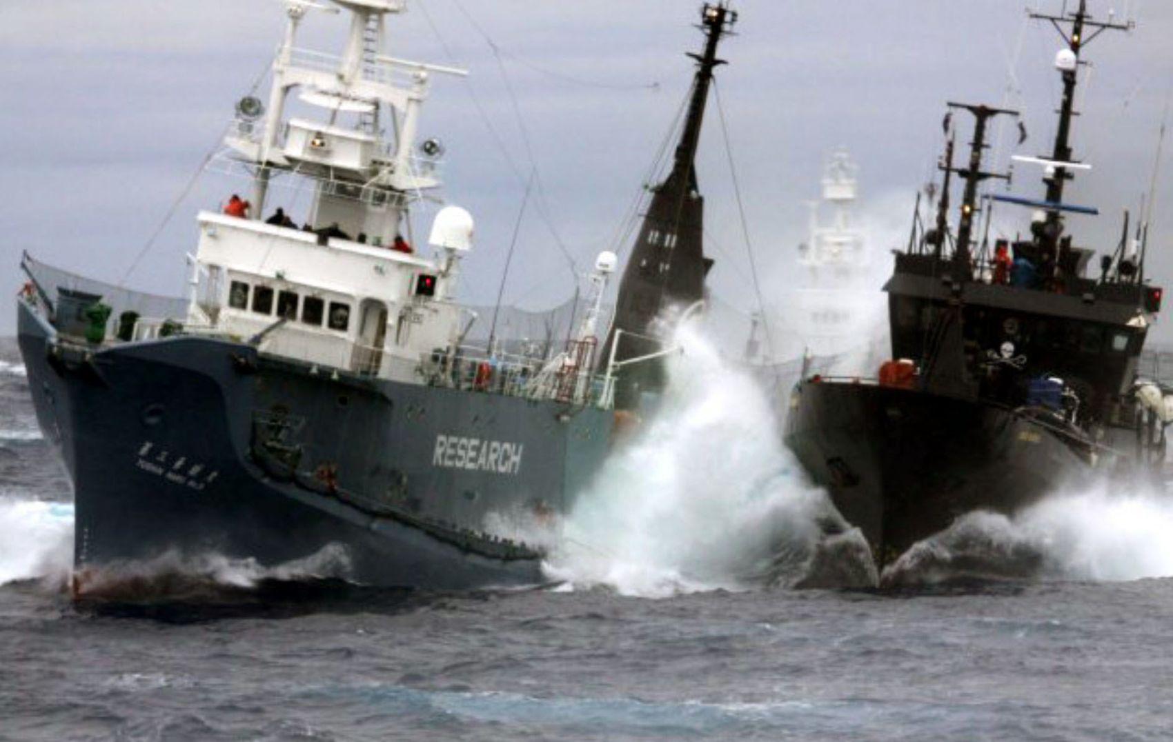 Japan Whaling IWC 007
