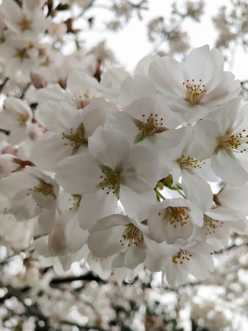 'Peaceful bloom'