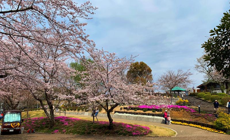 'What a strange thing! to be alive beneath sakura…'