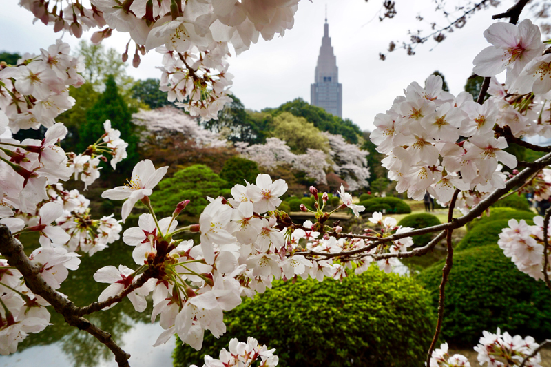 'Paradise in the heart of tokyo'