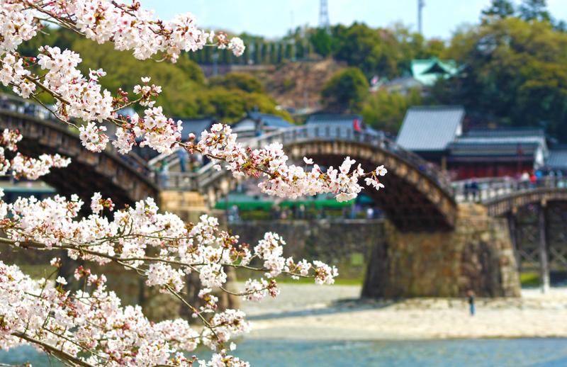 'Kintaikyo Sakura'