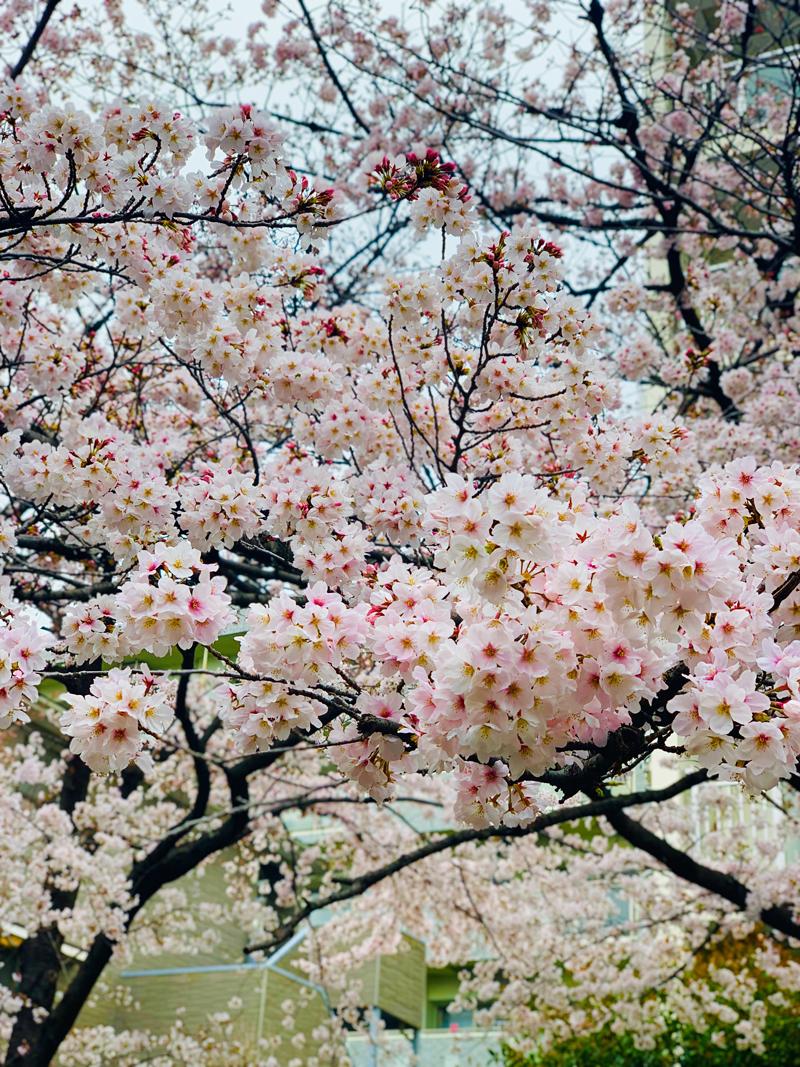 'Fully bloom'