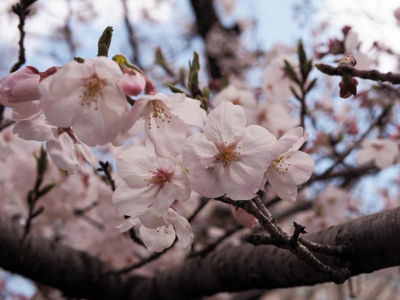 'Shades of spring.