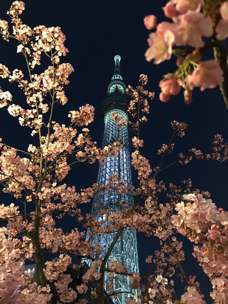 'Sakura@SkyTree'