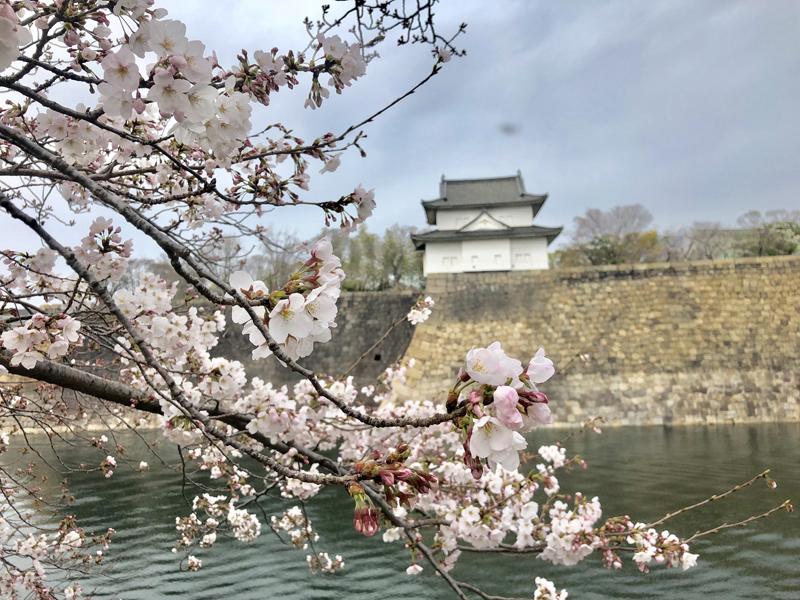 'Sakura in Osaka Castle'