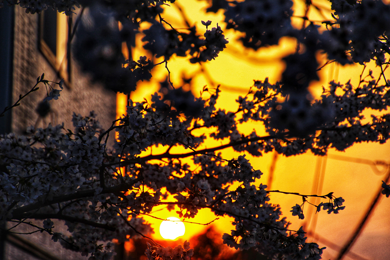 'Sunset at Philosopher's path, Kyoto'