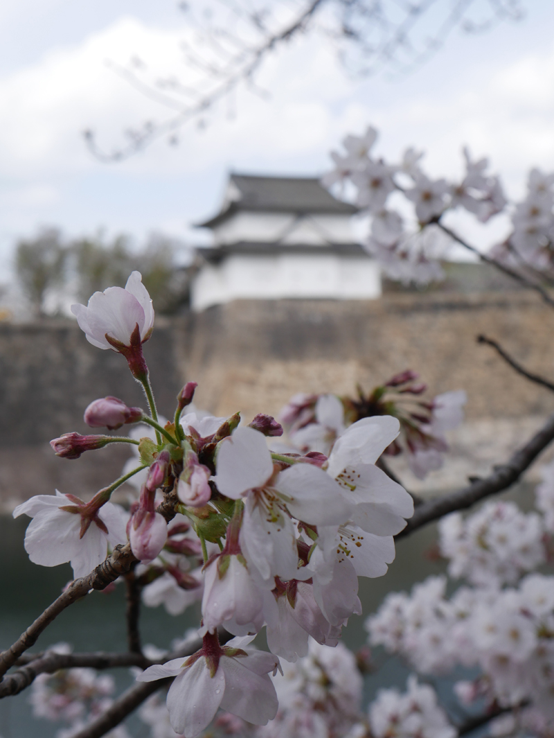 'Sakura, Osaka Castle, Osaka, Japan'