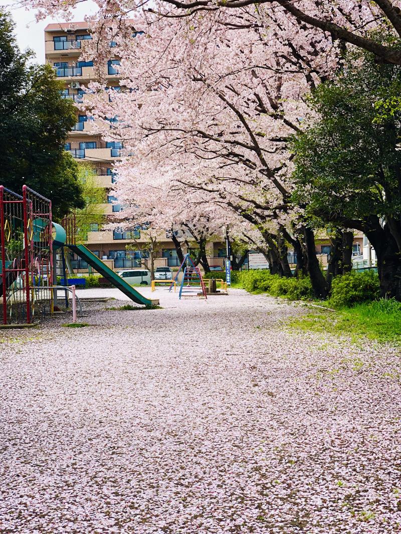 'Sakura Carpet @ d' Park'