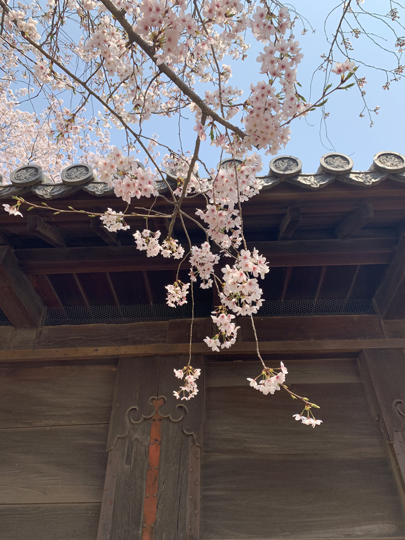 'A spring day at Himeji castle'