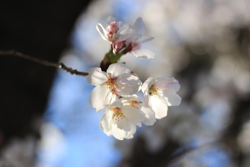 '四月の約束'