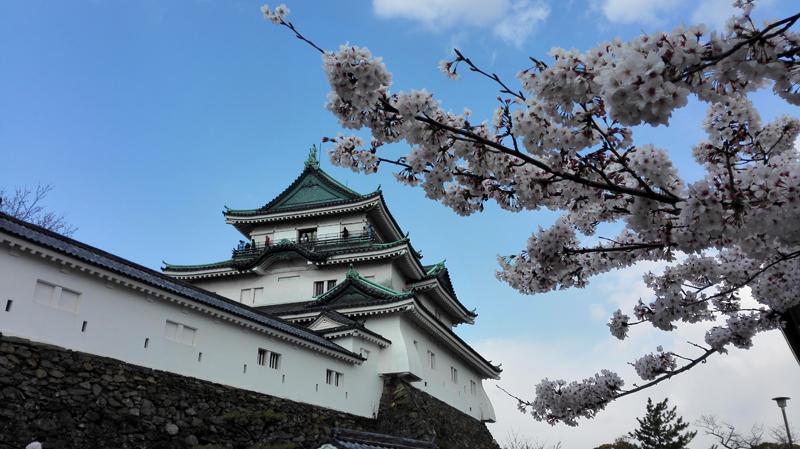 'Sakura @ Wakayama Castle'