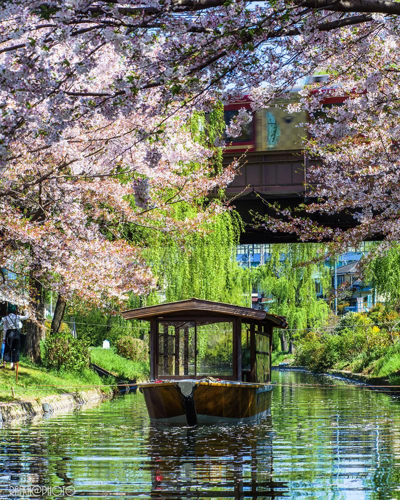 'Traditional boat with sakura'