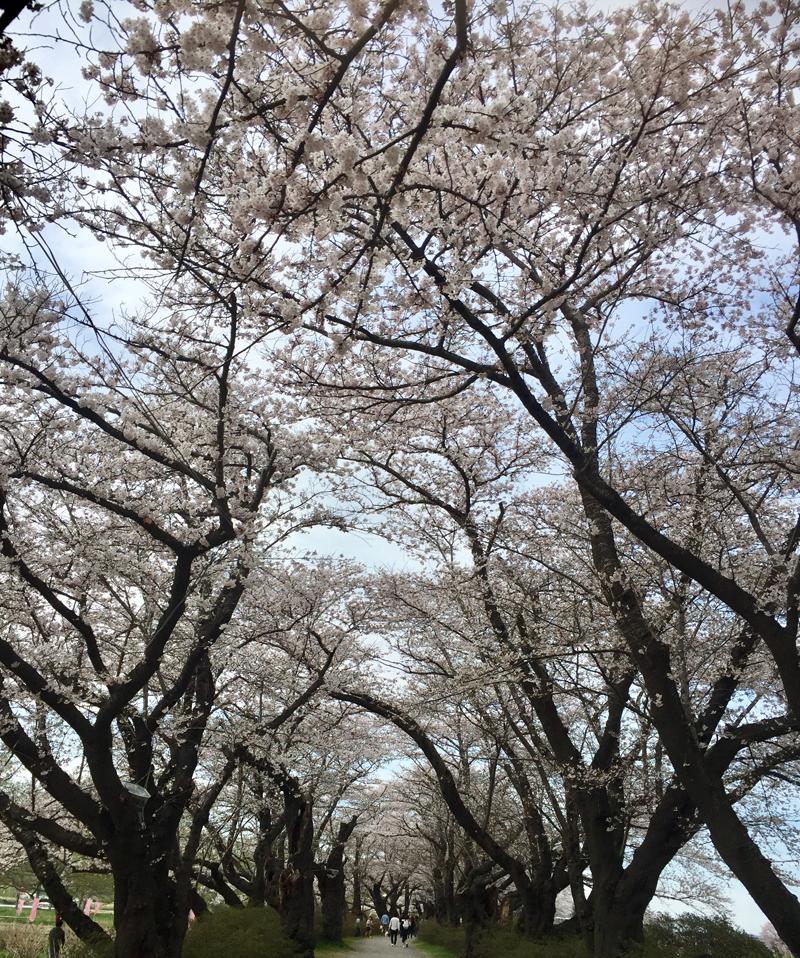 'Wonders of Japan'