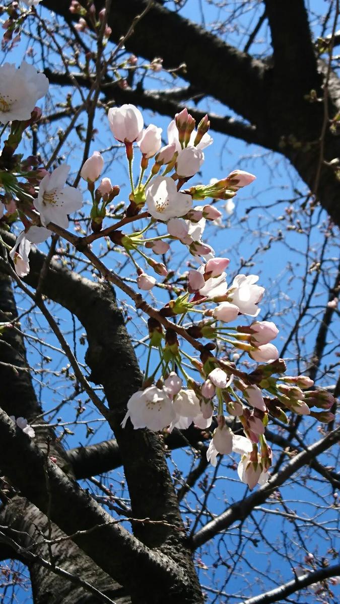 'Sakura 2019 kita ku Toshima park'