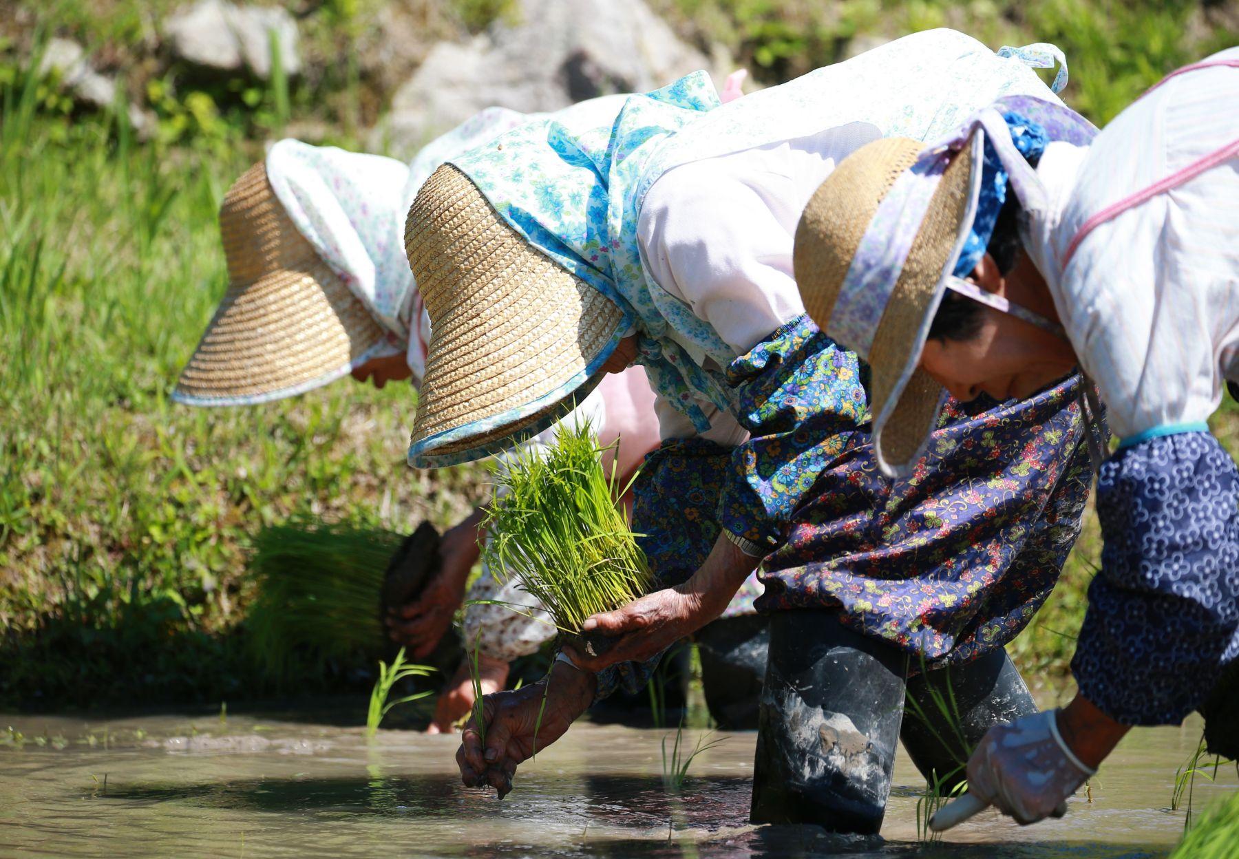 Beautiful Japan Kumano Thousands of Rice Paddy 001