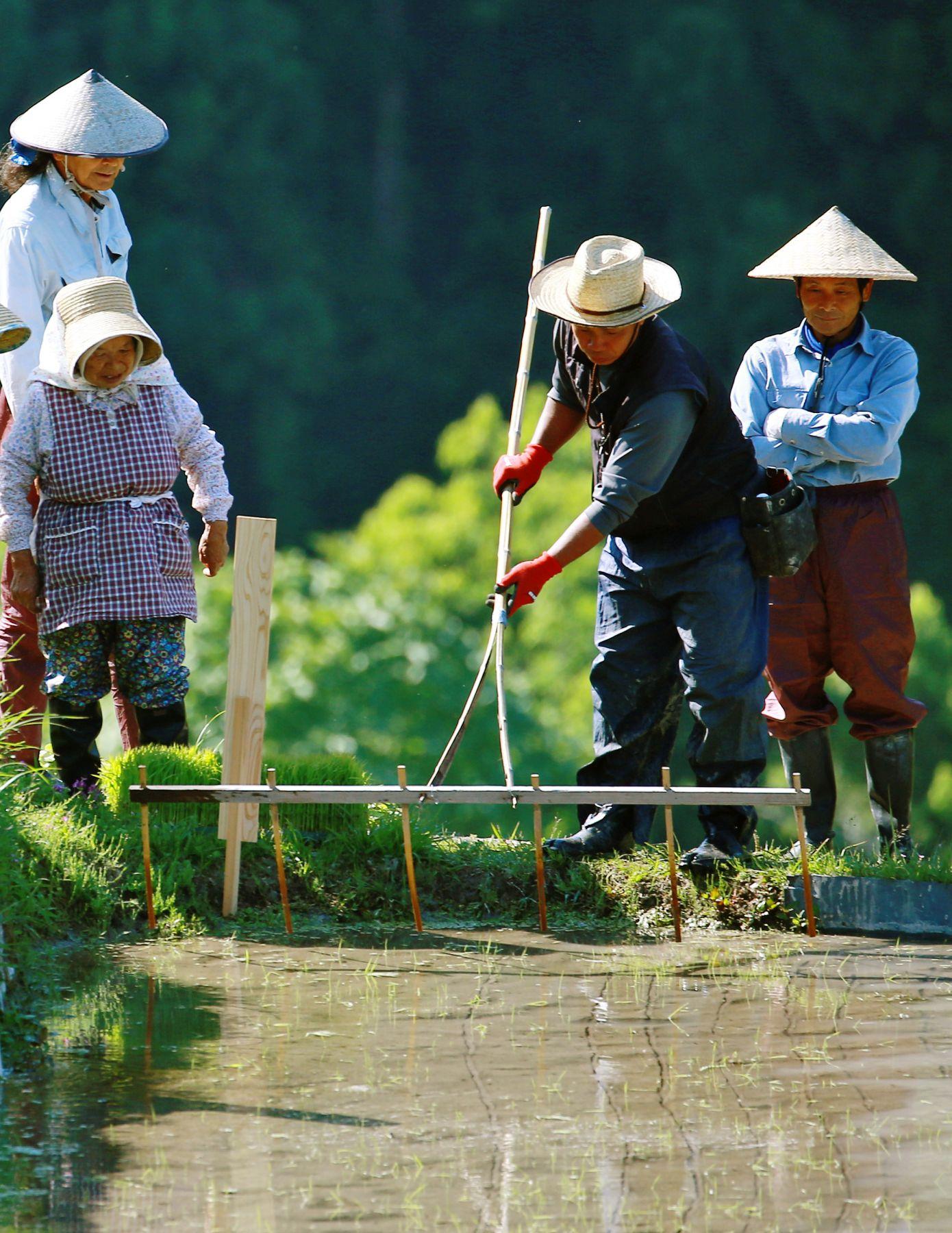 Beautiful Japan Kumano Thousands of Rice Paddy 003