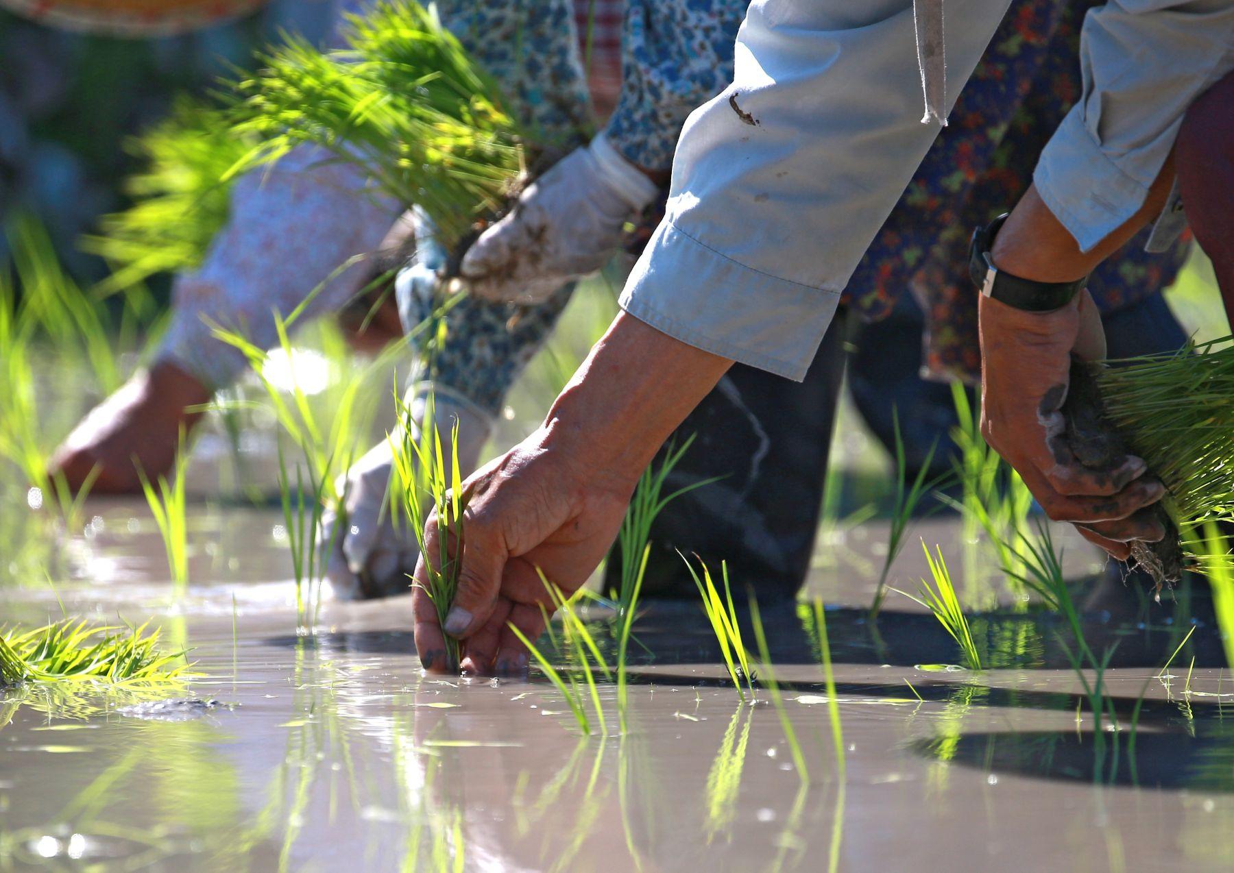 Beautiful Japan Kumano Thousands of Rice Paddy 005
