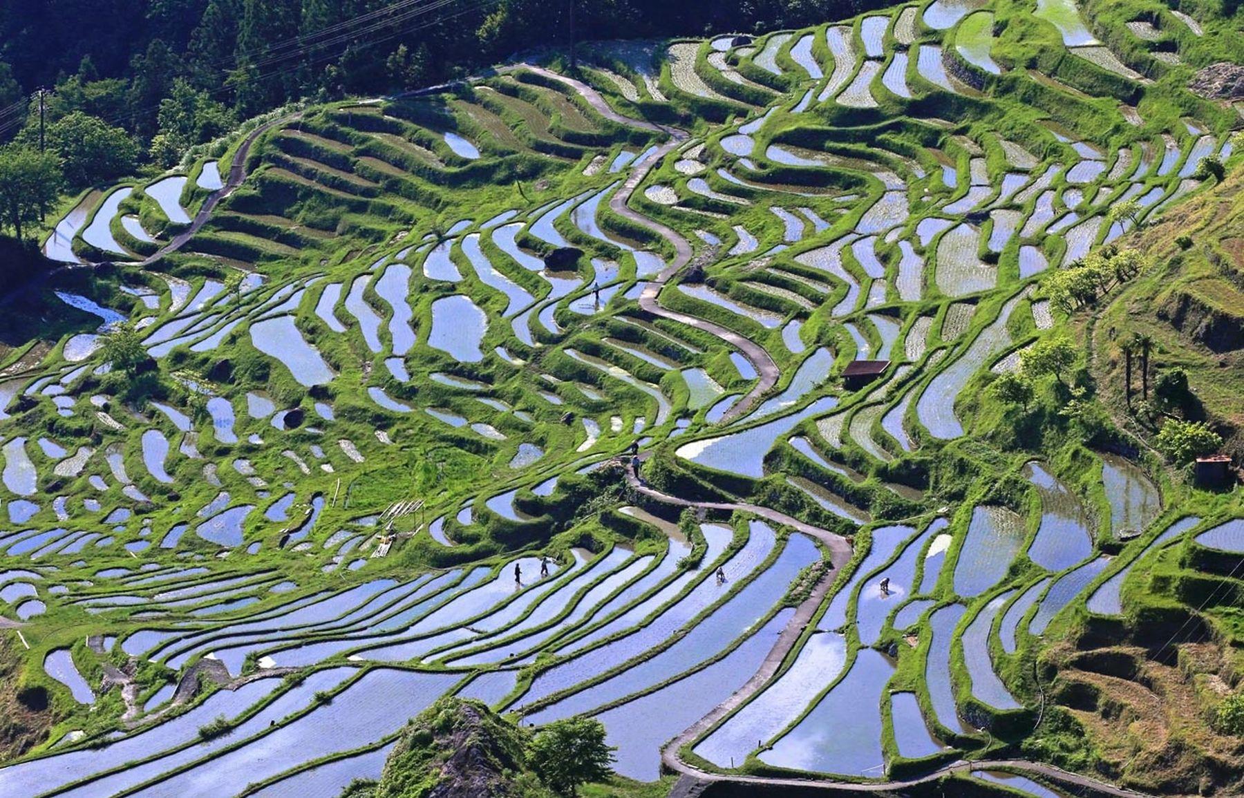 Beautiful Japan Kumano Thousands of Rice Paddy 008