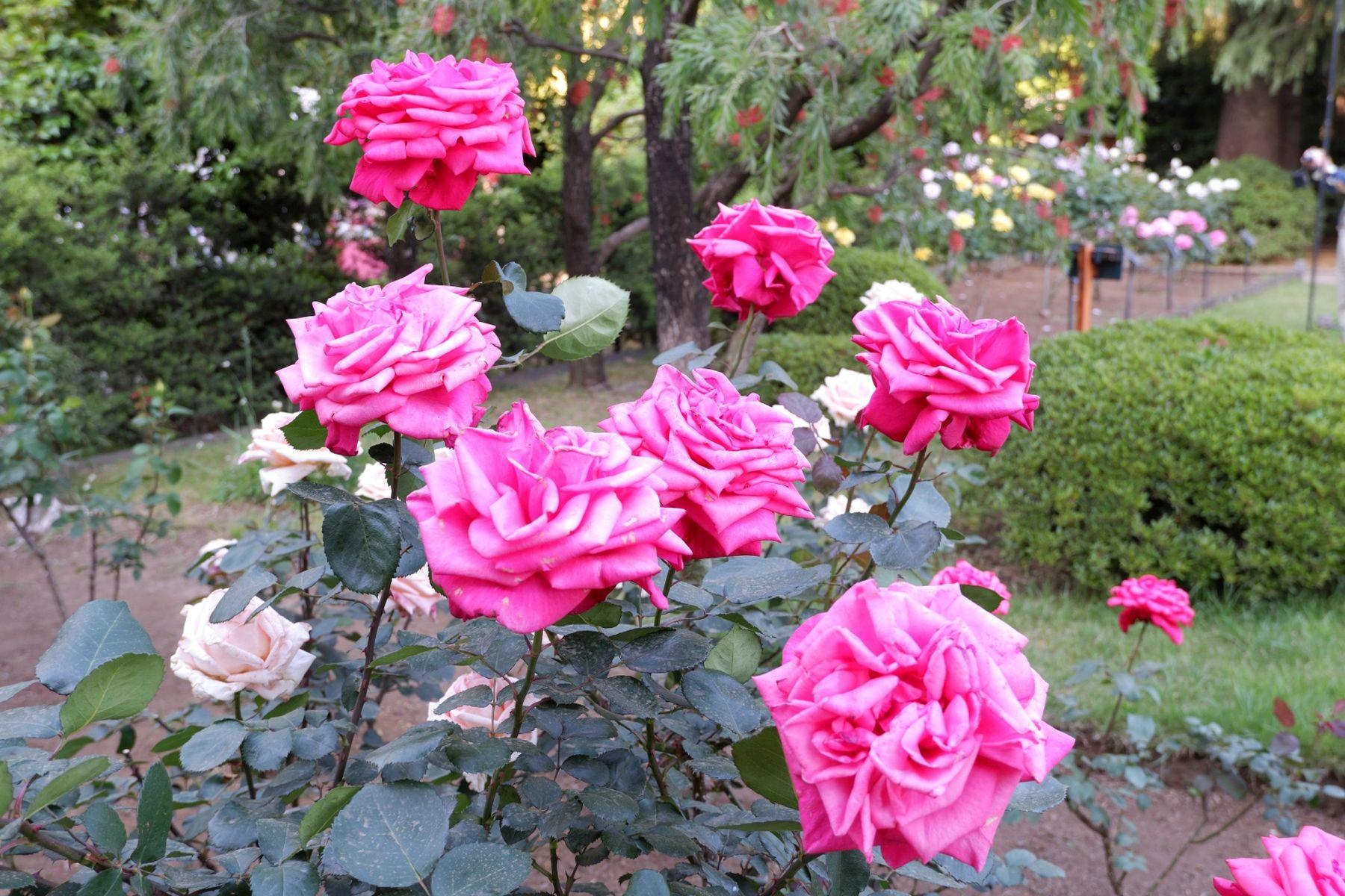 Japan Gardens of Wealth Furukawa teien 002