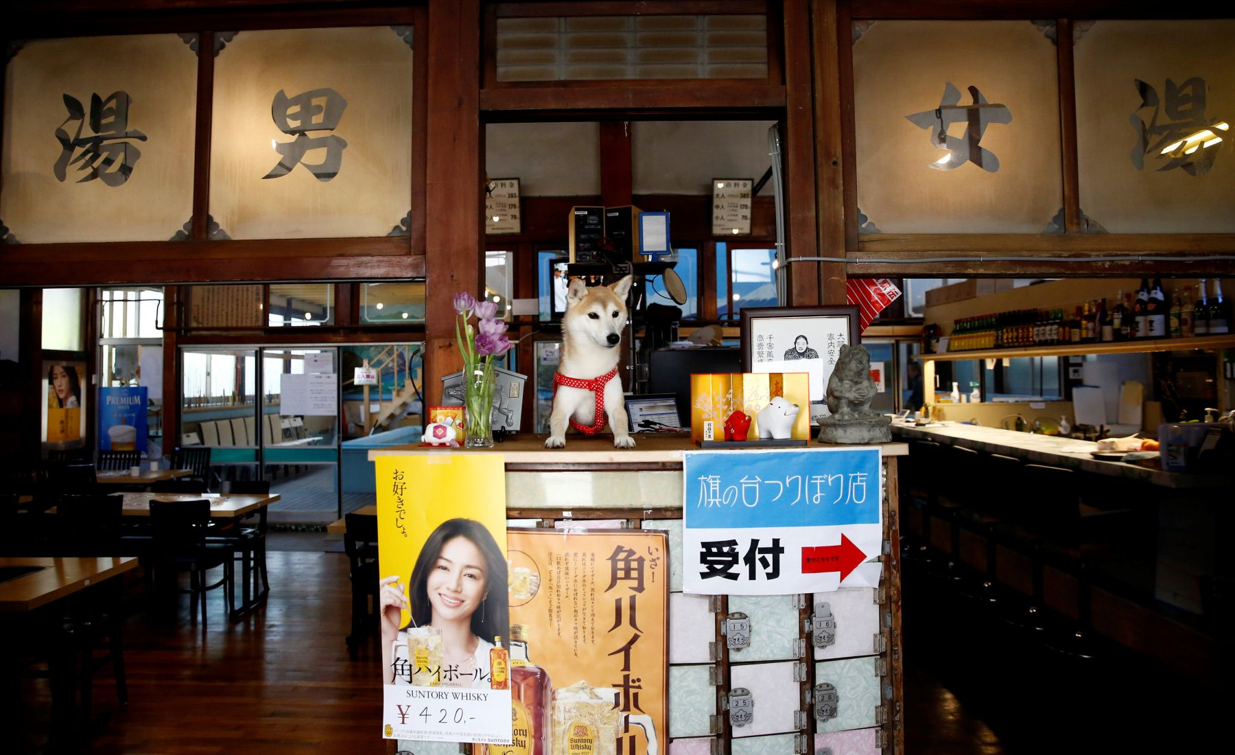 A pet dog sits on a front desk at Hatanodai Indoor Fishing, an indoor fishing facility which was converted from an old bathhouse that went out of business, in Tokyo