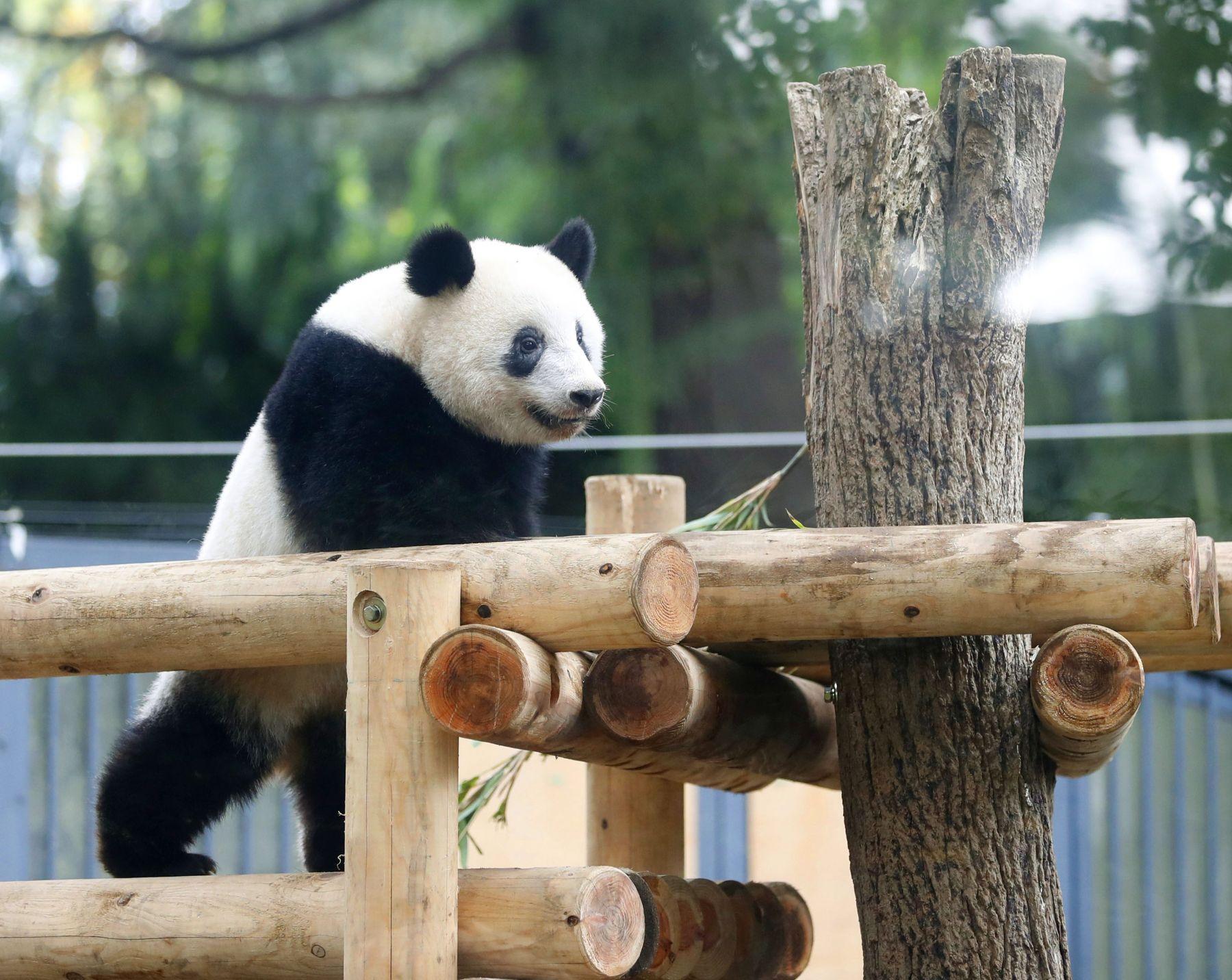 Tokyo Ueno Panda 2 Year Old Birthday 001