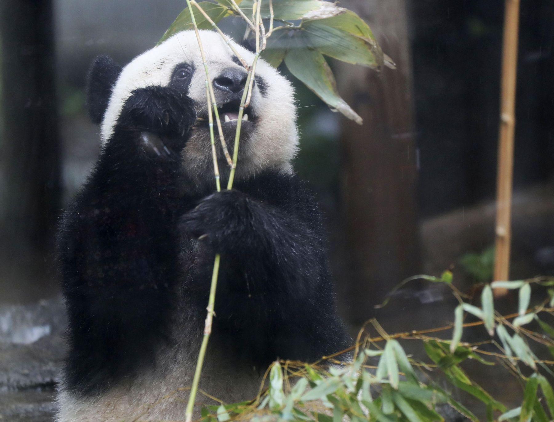 Tokyo Ueno Panda 2 Year Old Birthday 005
