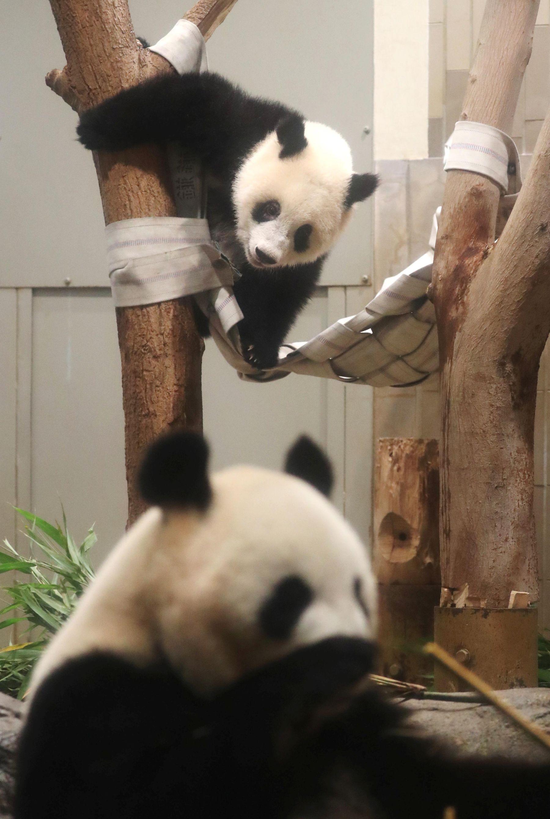 Tokyo Ueno Panda 2 Year Old Birthday 016