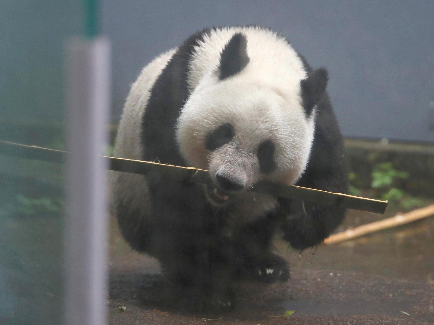 Tokyo Ueno Panda 2 Year Old Birthday 017