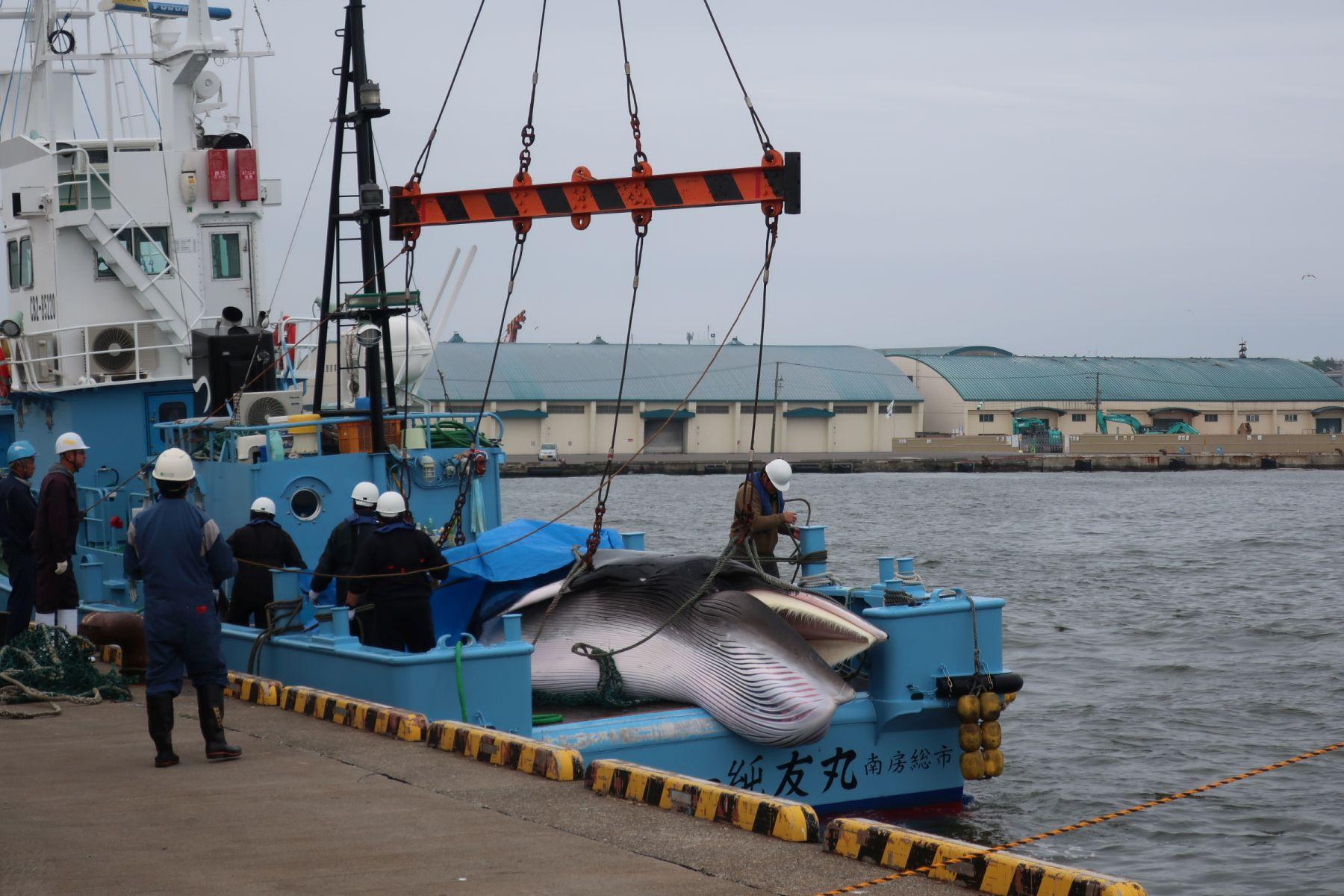 Japan Kushiro Commercial Whaling 001