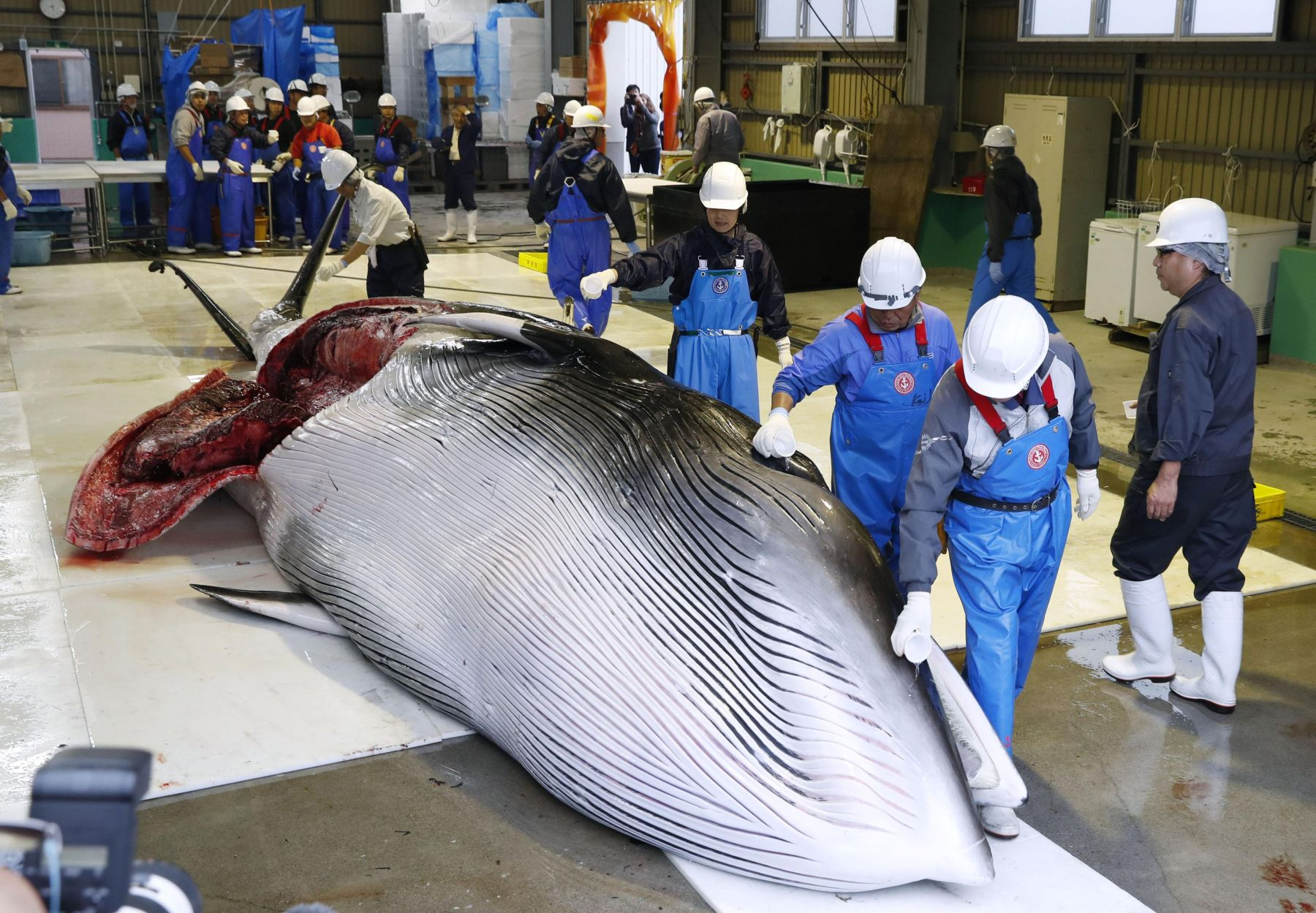 Japan Resumes Commercial Whaling 007
