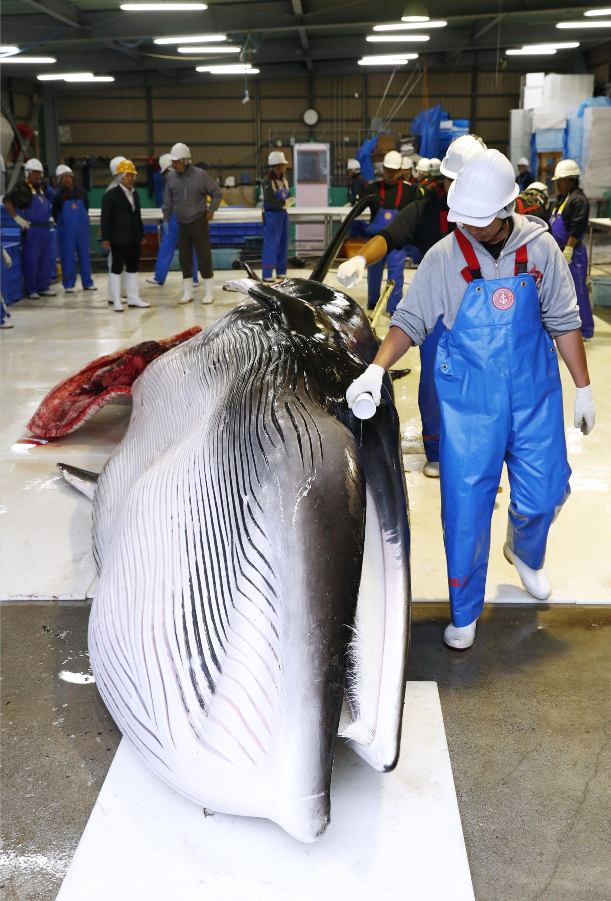 Japan Resumes Commercial Whaling 008