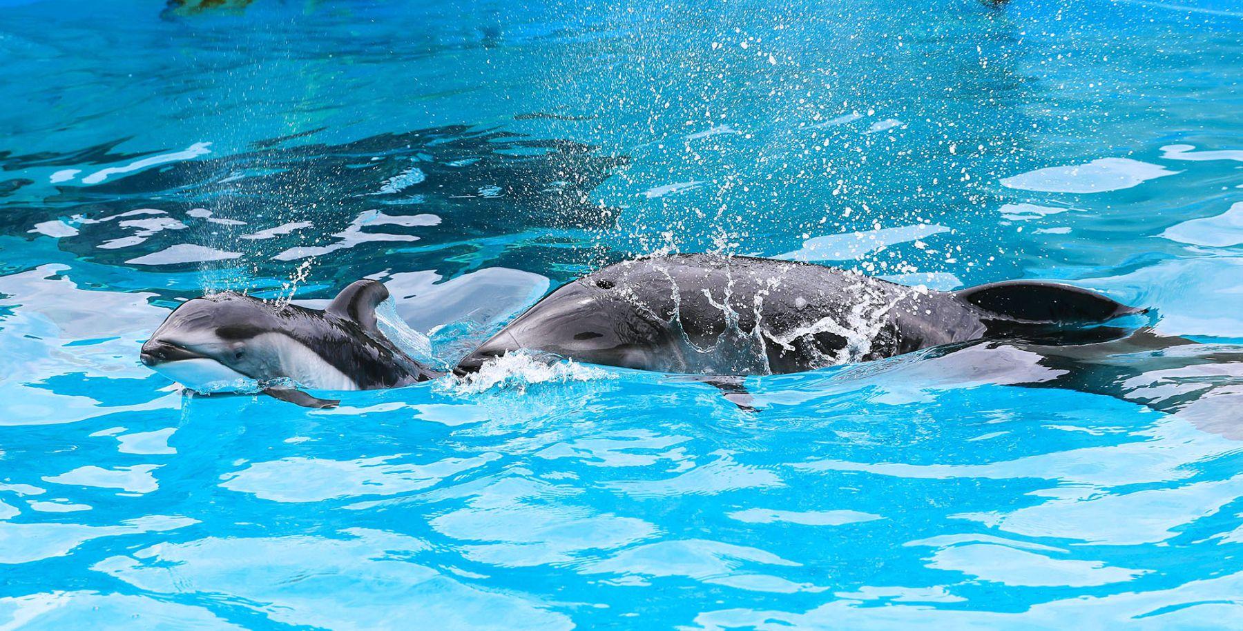 Japan Aquariums Proud Mission_ Educating People, Preserving Dolphins 007