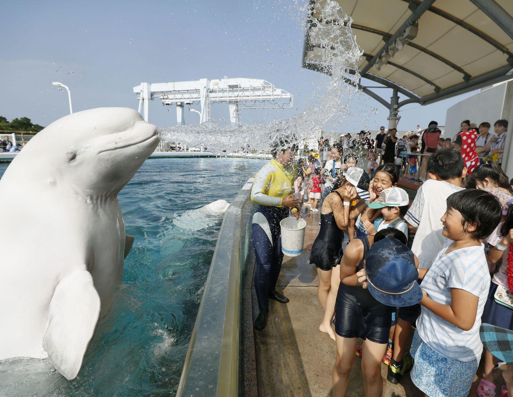 Japan Aquariums Proud Mission_ Educating People, Preserving Dolphins 010
