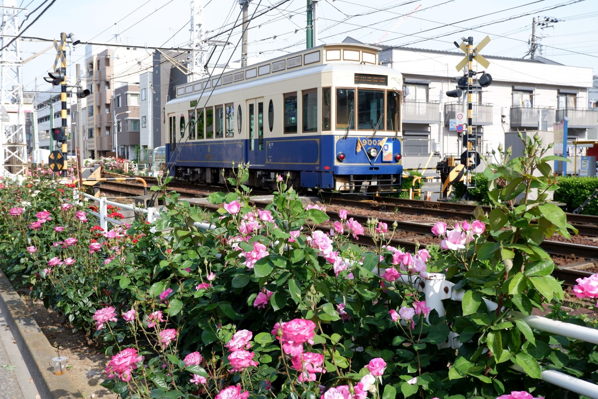 Japan Trams Through the Blossoms Discovering Tokyo on the Arakawa Line 022