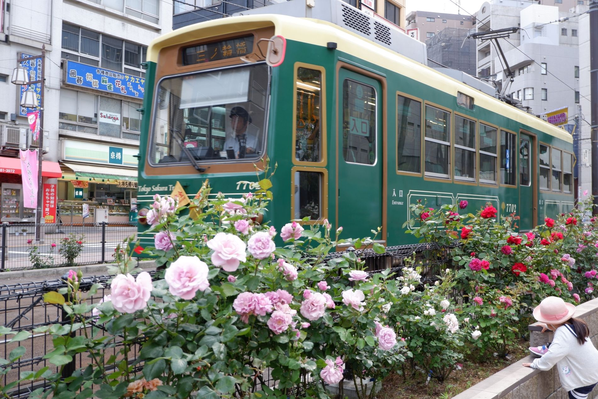 Japan Trams Through the Blossoms Discovering Tokyo on the Arakawa Line 028