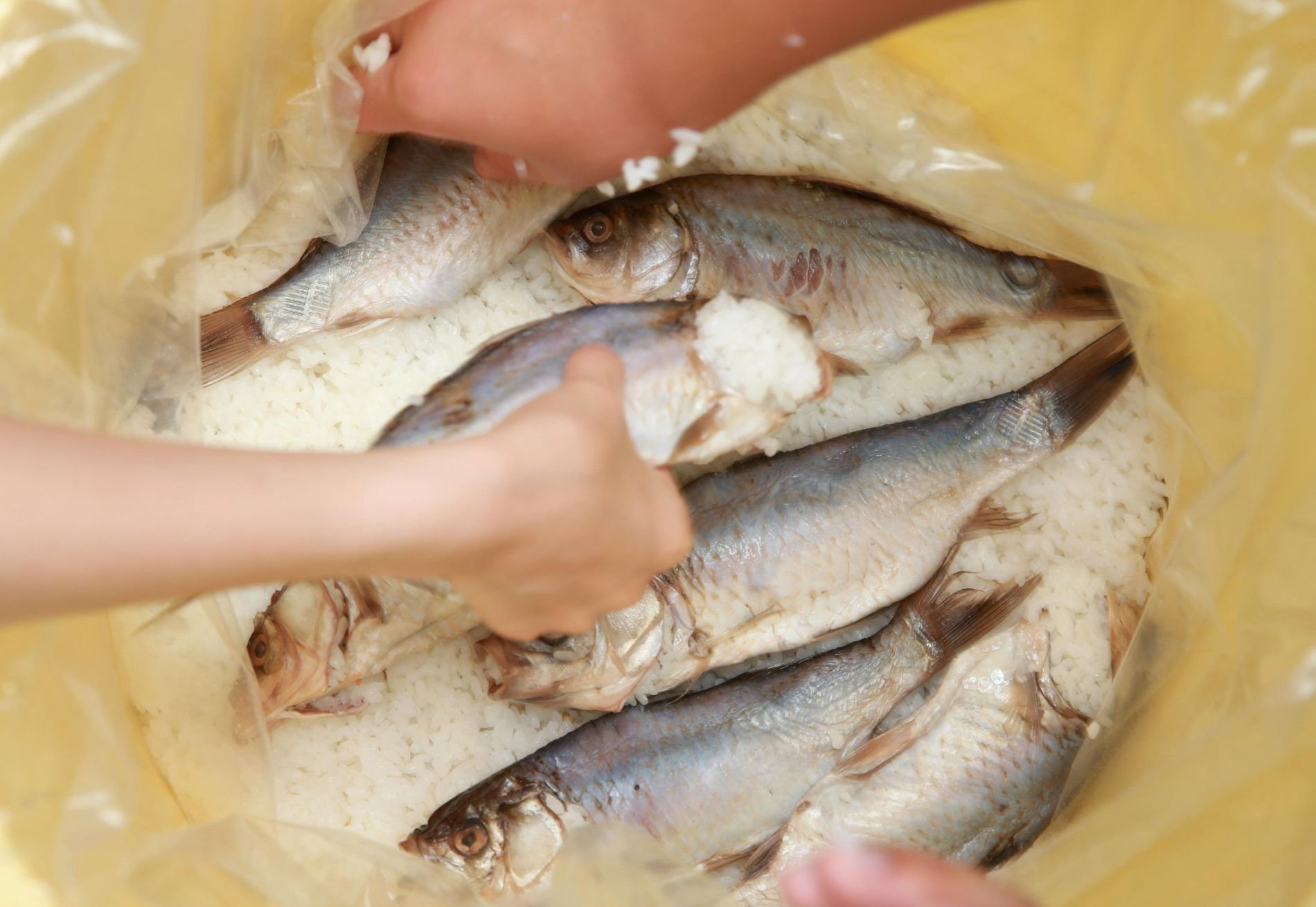 Summer on Okishima A Taste of Tradition with Island Fish 014