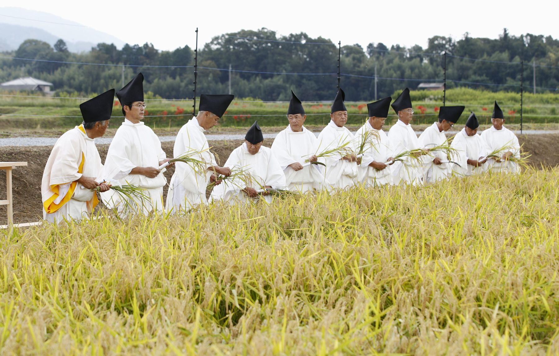 Hidden Wonders of Japan Harvesting Rice for the Imperial Succession 003