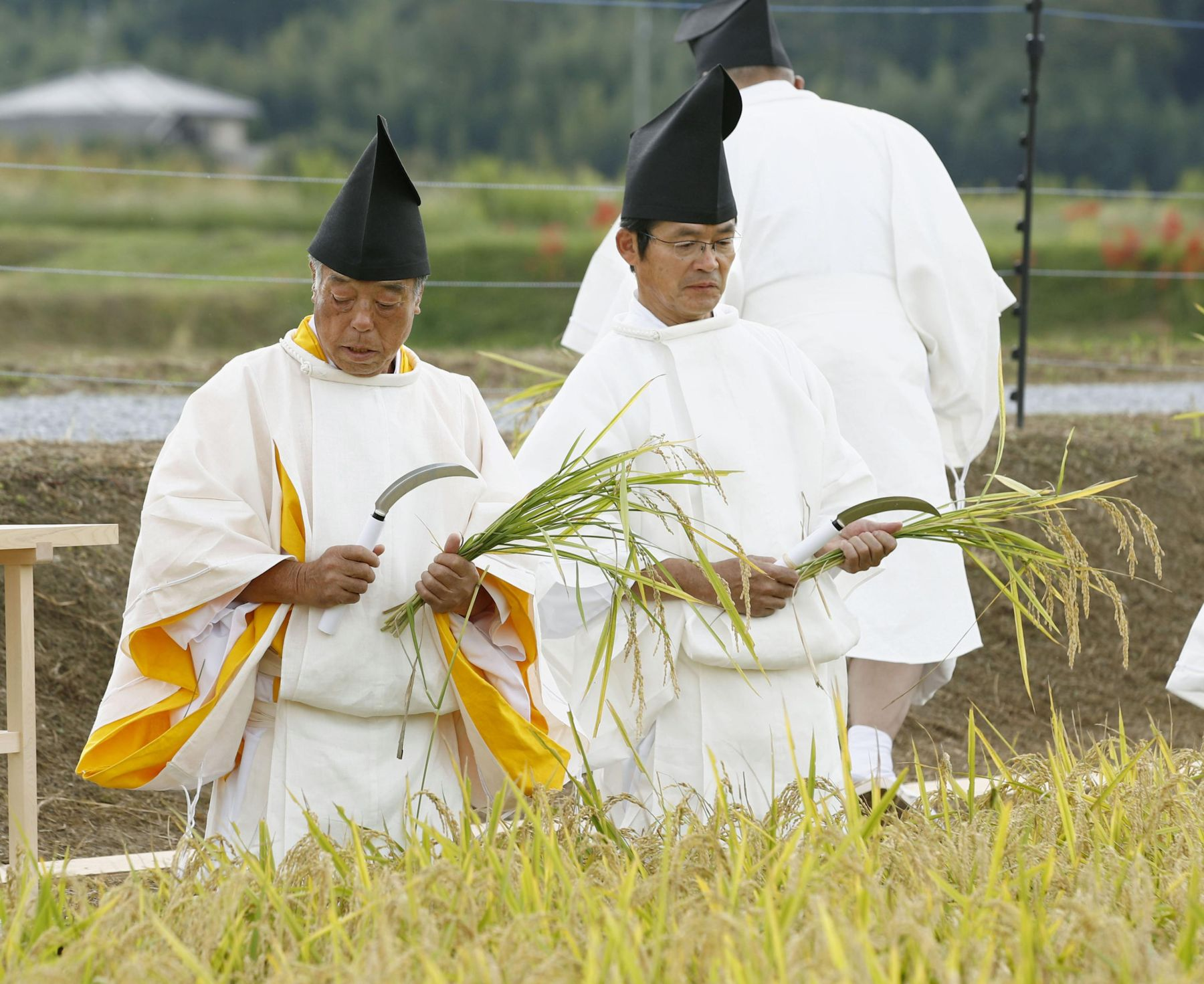 Hidden Wonders of Japan Harvesting Rice for the Imperial Succession 004