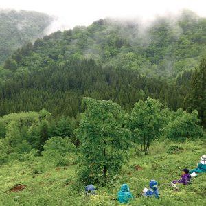 春のワラビ採り 「めぐる季節の山の暮らし」-- 大滝ジュンコ