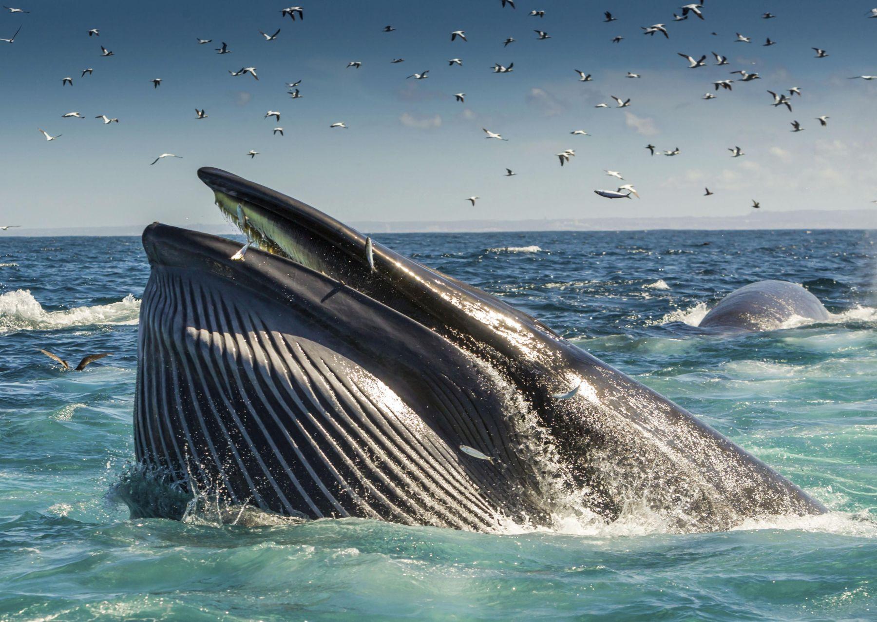 Japan Whaling 012