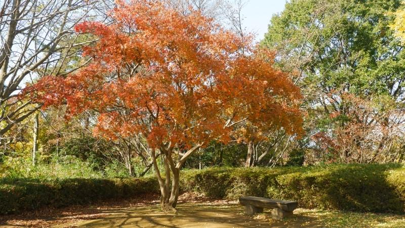 fall–colors–dscf2912