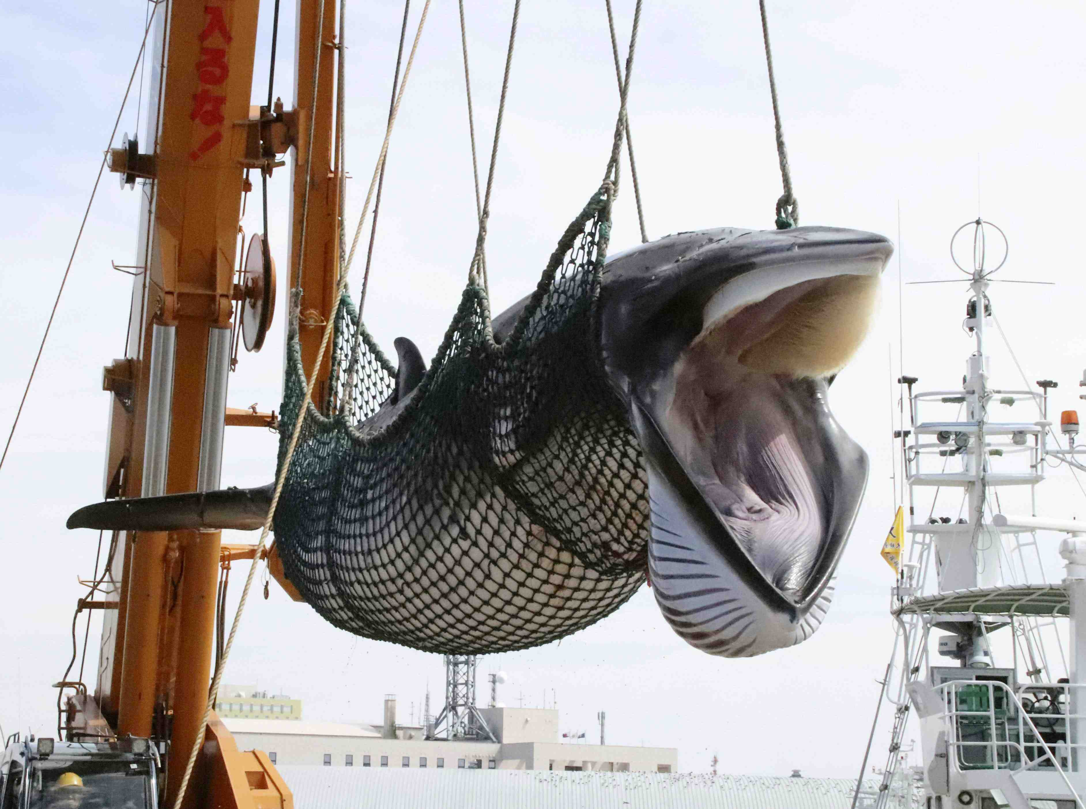 Japan Whaling 011