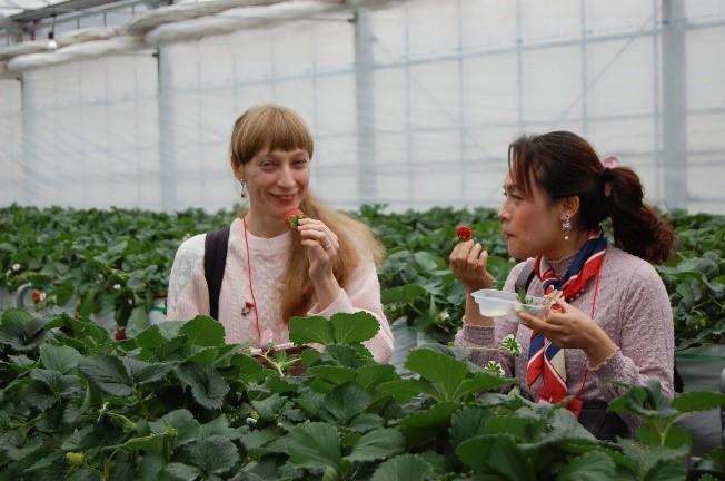 Strawberry Picking in Chiba2