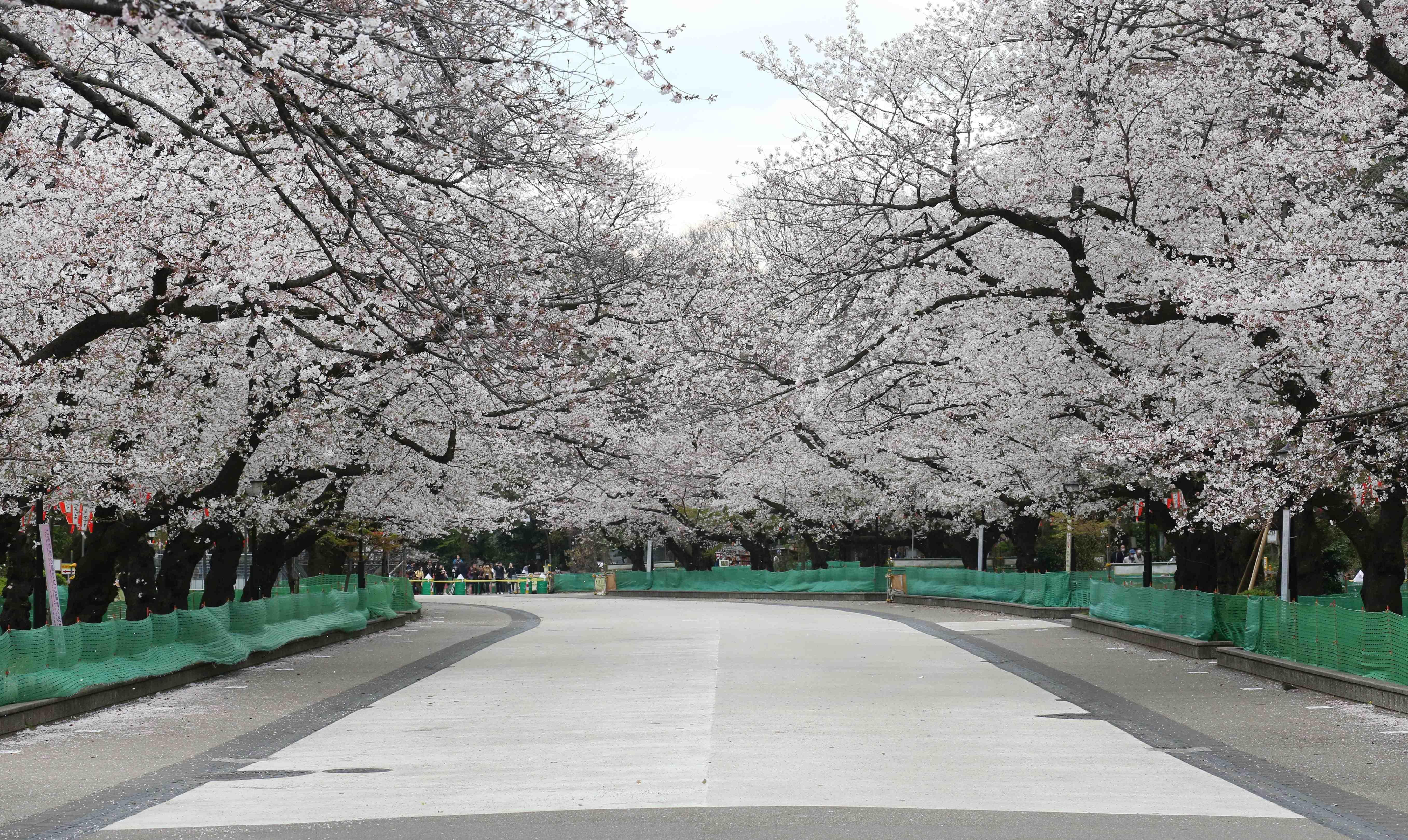 PHOTOS _ Tokyo on weekend of Coronavirus Crisis 002