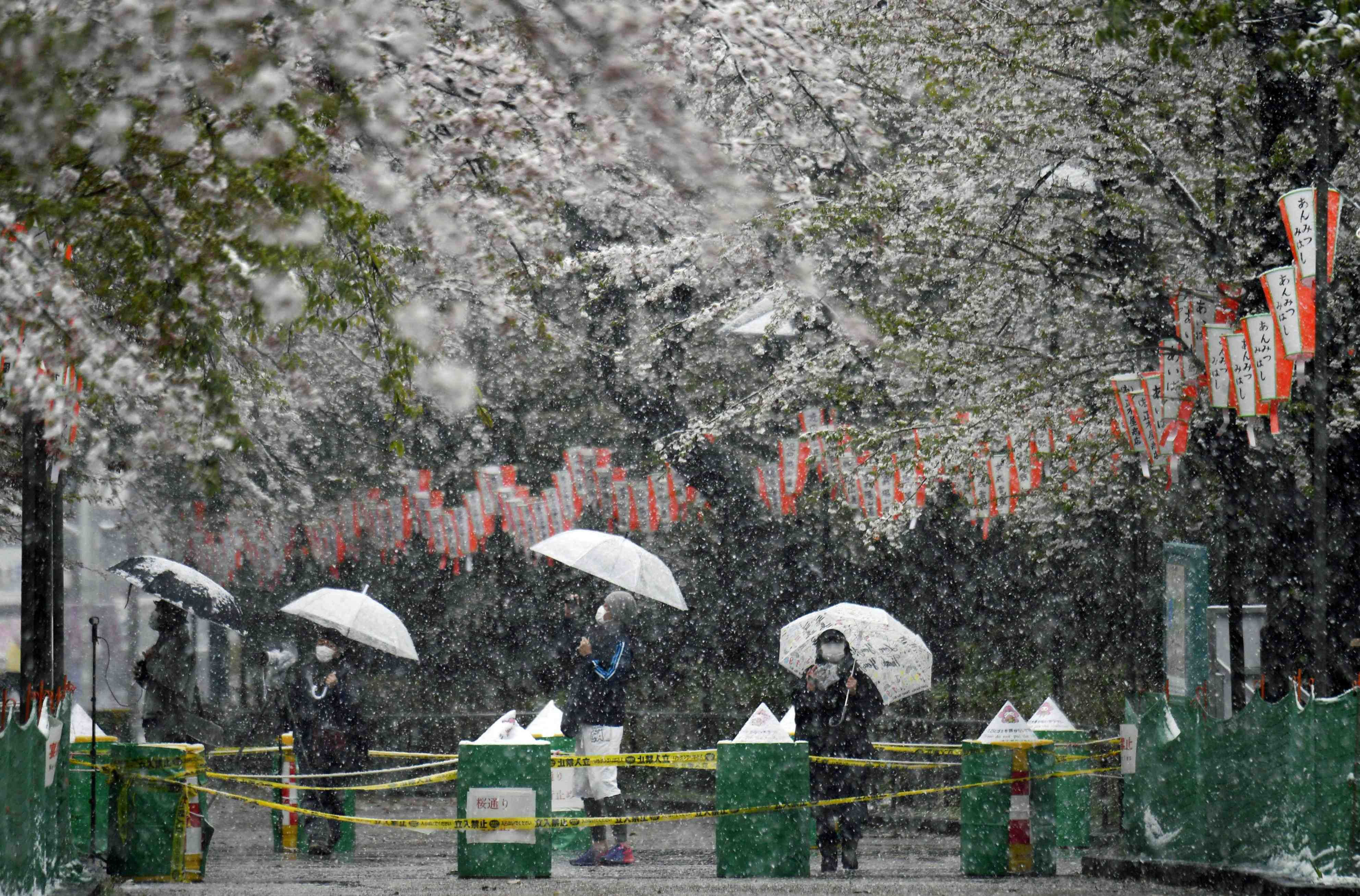 PHOTOS _ Tokyo on weekend of Coronavirus Crisis and Spring Snow 019
